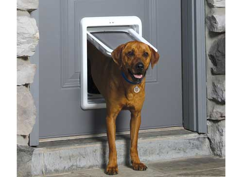 Top 10 Best Automatic Electric Dog Doors Reviews in 2018 – Paramatan