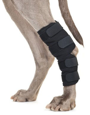 Back on Track Therapeutic Dog Rear Leg_Hock Brace (Pair) Large 8.75-Inch