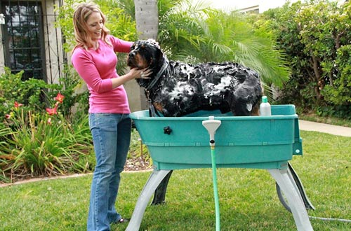 Elevated Pet Bathing Large