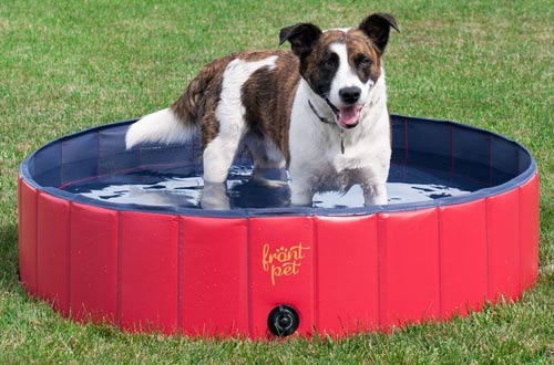 Top 10 Best Plastic Dog Pools for Playing Reviews In 2018