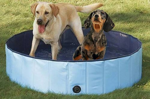 PYRUS Inflatable Dog Bathtub Tub for Dogs or Cats