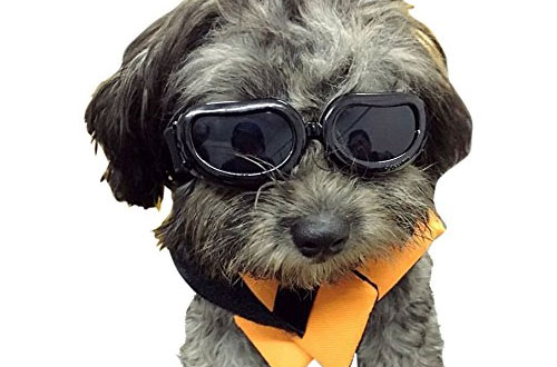 Top 10 Best Dog Goggles / Dog Sunglasses Reviews In 2019