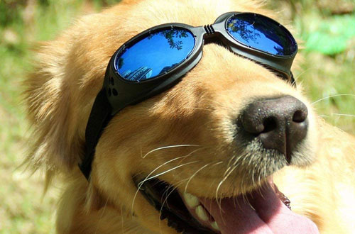 Pet UV Protective windproof Goggles
