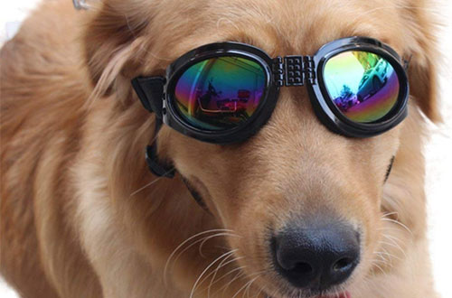NACOCO Pet Glasses Dog Sunglasses Dog Glasses