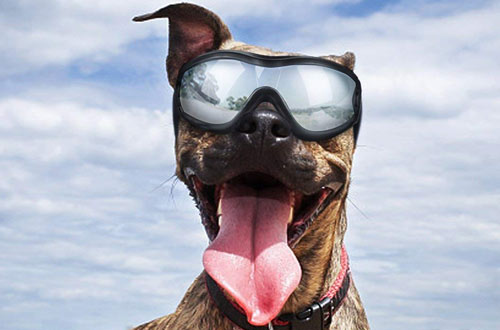 K&L Pet Dog Goggles - Dog Sunglasses