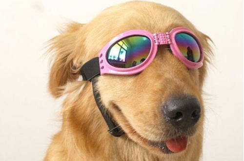 Top-Elecmart Pet Glasses Dog Sunglasses