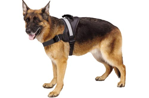 Top 10 Best Dog Harnesses Reviews In 2018